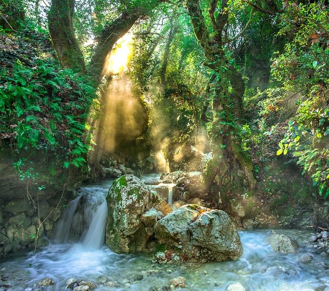 Dschungel, Regenwald, Wald, Wasser, Fluss, Stein